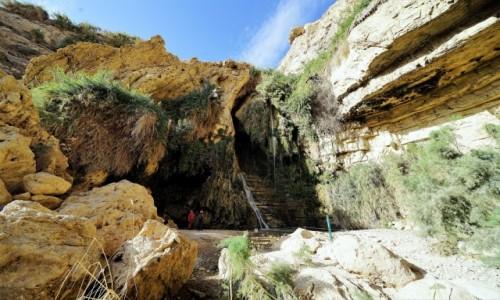 Zdjecie IZRAEL / Morze Martwe / Ein Gedi, Wodospad Dawida (górny) / Podglądanie natury