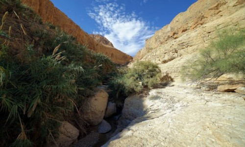 Zdjecie IZRAEL / Morze Martwe / Ein Gedi / Wzdłuż strumyka