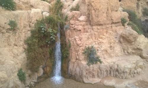 Zdjecie IZRAEL / Pustynia Judzka / En Gedi / W parku En Gedi 2
