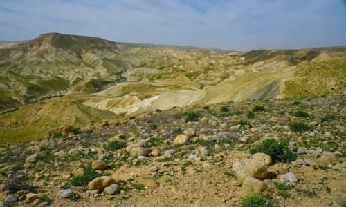 Zdjecie IZRAEL / Pustynia Negew / Park Narodowy Avdat / Wiosna