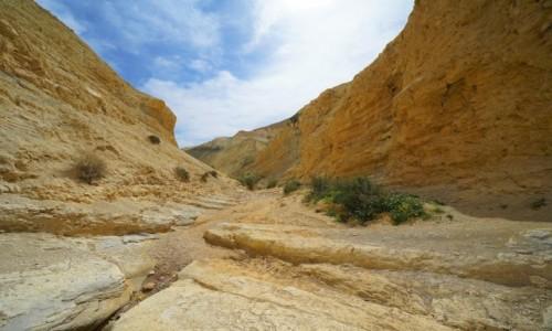 Zdjecie IZRAEL / Pustynia Negew / Park Narodowy Avdat / W korycie wyschniętej rzeki
