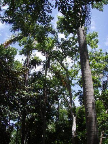 Zdjęcia: okolice Ocho Rios, las tropikalny, JAMAJKA