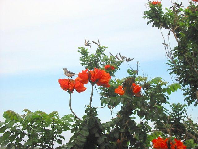 Zdjęcia: park, odpoczynek przed nastepnym lotem, JAMAJKA