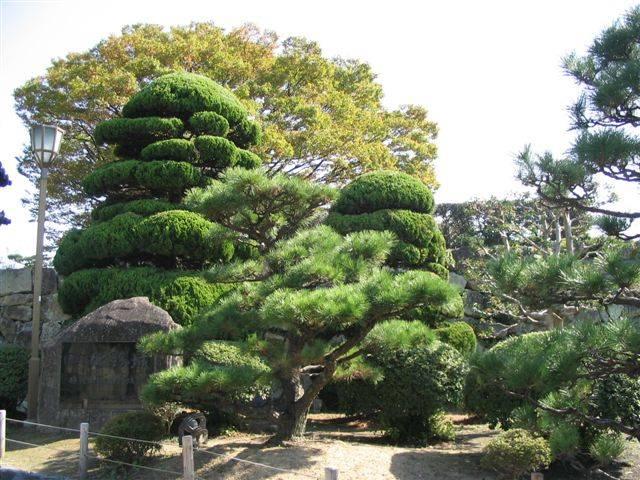 Zdjęcia: Himeji, Ogród Hakkuro-jo, JAPONIA