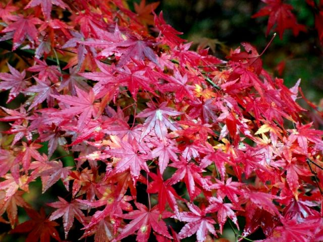 Zdj�cia: Kioto, Kioto, Magia Barw, JAPONIA