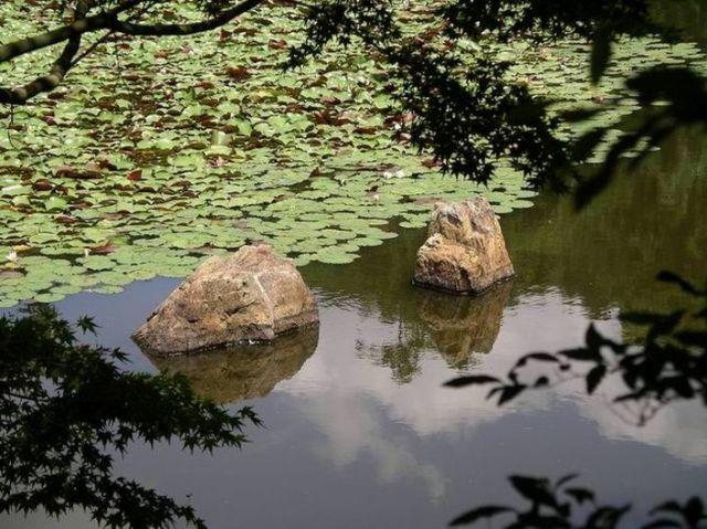 Zdjęcia: Kioto, Kioto, ogród japoński, JAPONIA