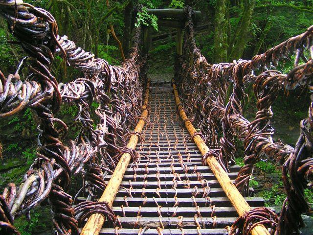 Zdj�cia: Iya Valley, -Shikoku, Most z pn�czy winoro�li, JAPONIA