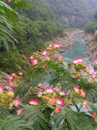 Zdjęcia: Iya Valley, -Shikoku, Wąwóz Koboke-Oboke, JAPONIA