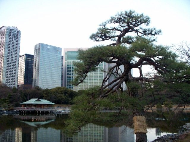 Zdjęcia: Tokio, Tokio, Parczek w  srodku miasta, JAPONIA