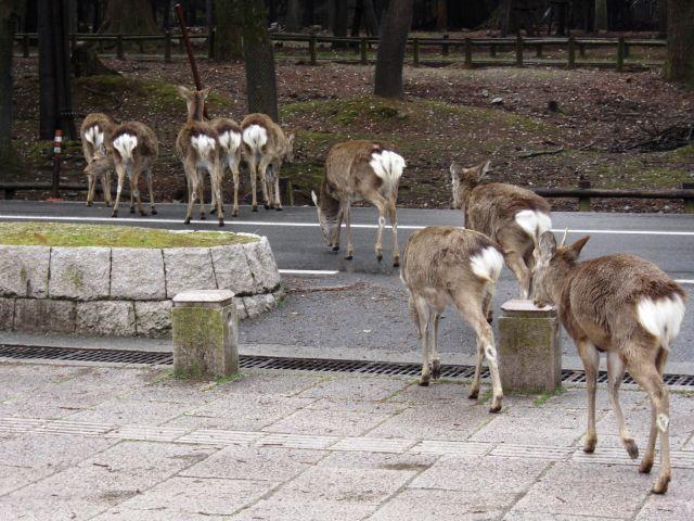 Zdjęcia: NARA, Japonia - NARA, JAPONIA