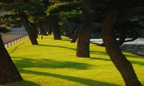 Zdjecie JAPONIA / Tokio / Ginza / zadbanosc parkowa