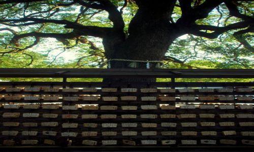 JAPONIA / Tokio  / temple / drzewo życzeń