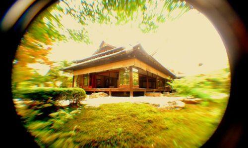JAPONIA / Kioto  / temple / patrzy ryba na świątynię