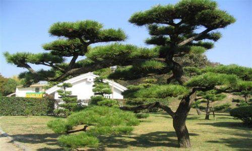 Zdjecie JAPONIA / brak / Himeji / Ogród Hakkuro-jo