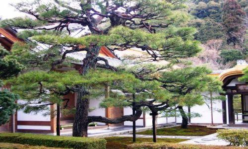 Zdj�cie JAPONIA / - / Kyoto / Swiatynia w Kyoto