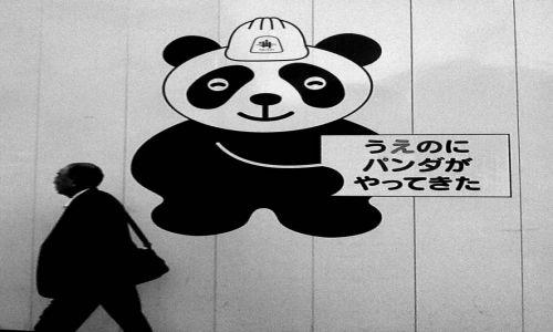 Zdjecie JAPONIA / Tokyo / Tokyo / Panda przeprasza za utrudnienia