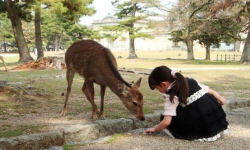 """Zdjęcie JAPONIA / Nara / Nara / Konkurs_""""kobieta karmiąca daniele w dawnej stolicy Japonii"""