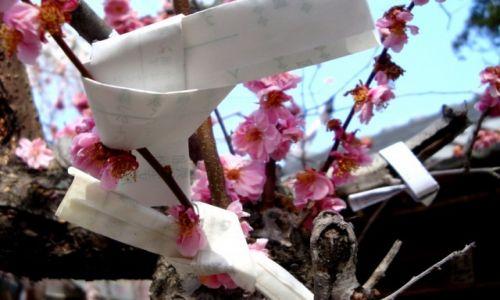 Zdjęcie JAPONIA / Nara / Nara / Modlitwy, prośby, życzenia.... i kwitnąca wiśnia