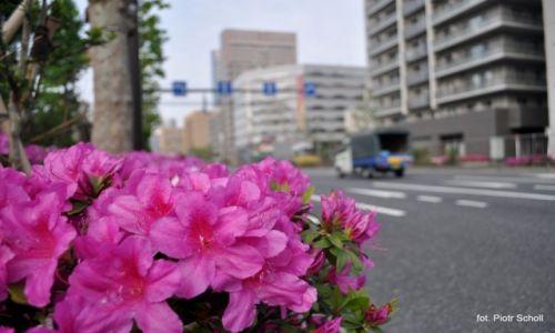 Zdj�cie JAPONIA / Tsukiji  / Tokyo / Kwiatuszki