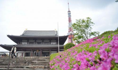 Zdj�cie JAPONIA / Tokyo Tower / Tokyo / 3 in 1