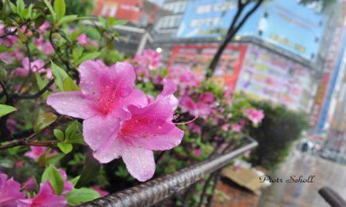 Zdj�cie JAPONIA / Ginza  / Tokyo / Kwiatuszek w Ginzie