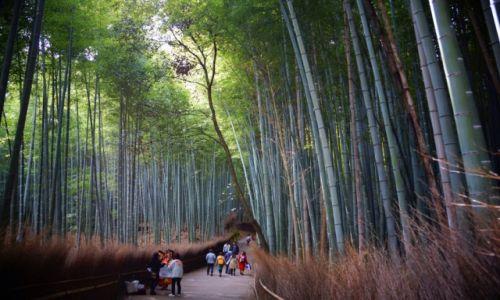 Zdjęcie JAPONIA / - / Las bambusowy - okolice Kioto / Las bambusowy