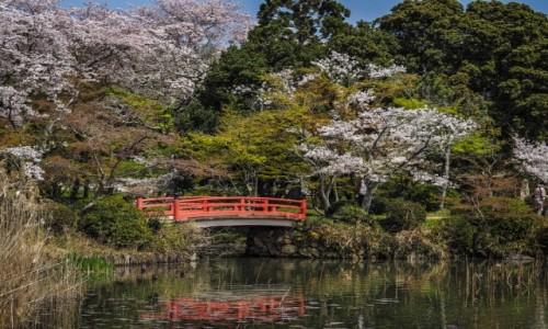 Zdjęcie JAPONIA / Prefektura Kyoto / Kyoto / Pejzaż z Kyoto