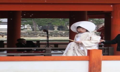 Zdjecie JAPONIA / Honsiu / Miyajima / Japonia wcale n