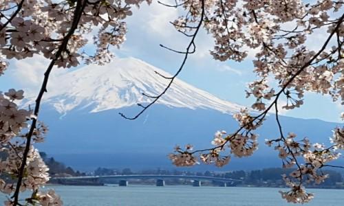 Zdjęcie JAPONIA / - / Kawaguchiko / Fuji five lakes