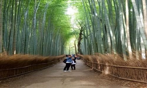 Zdjecie JAPONIA / - / Kyoto-Arashiyama / Bamboo forest