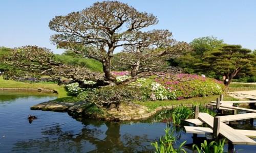 Zdjęcie JAPONIA / HONSIU / OKAYAMA / Ogród zen