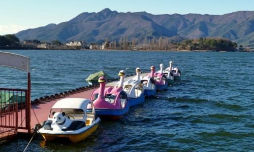 Zdjecie JAPONIA / Fuji Five Lakes / Jezioro Kawaguchiko / Jedna panda i sześć łabądków :)