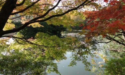 Zdjecie JAPONIA / Kioto / Park / Kolory