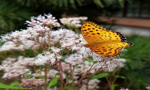 Zdjecie JAPONIA / Kioto / Arashiyama / Motyl, dostojka