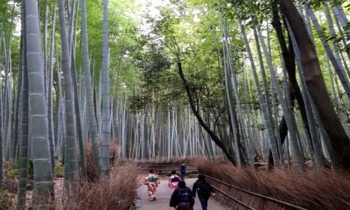Zdjecie JAPONIA / Kioto / Arashiyama / Bambusowy las