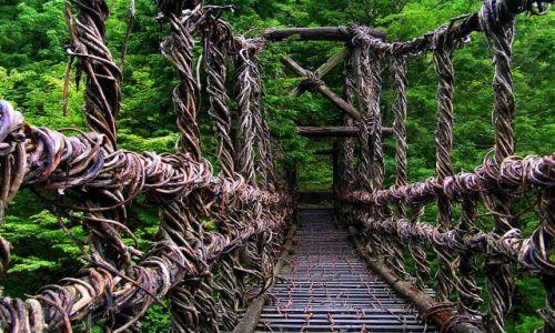 Zdjęcie JAPONIA / -Shikoku / Iya Valley / Most z pnączy winorośli
