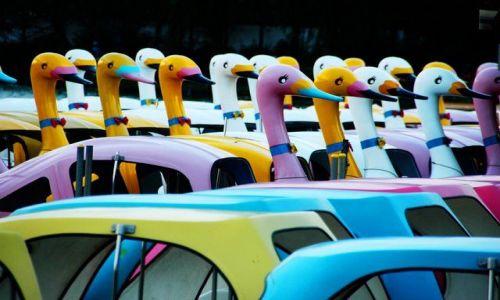 Zdjecie JAPONIA / brak / Park Ueno, Tokio / W parku Ueno