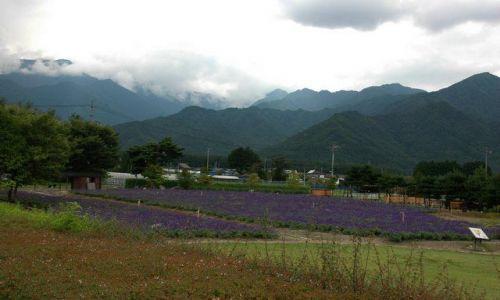 Zdjecie JAPONIA / Nagano / Azumino / Azumino