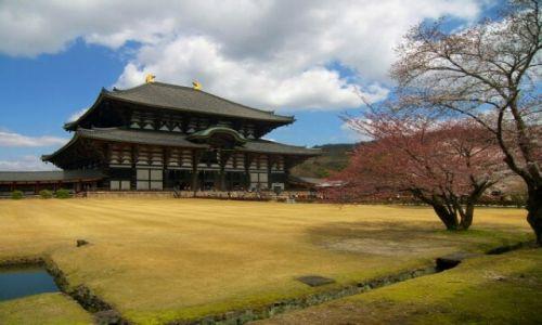 Zdjecie JAPONIA / Nara / jedna ze swiatyn / rogacz