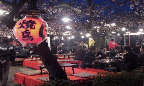 Zdjecie JAPONIA / Kensai / Kioto / balanga pod wisnia