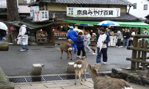 Zdjecie JAPONIA / brak / NARA / Japonia - NARA