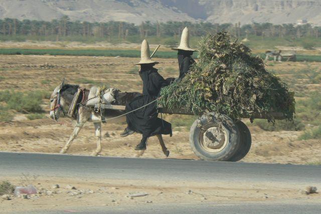 Zdjęcia: Wadi Hadramaut, Z pola do domu., JEMEN