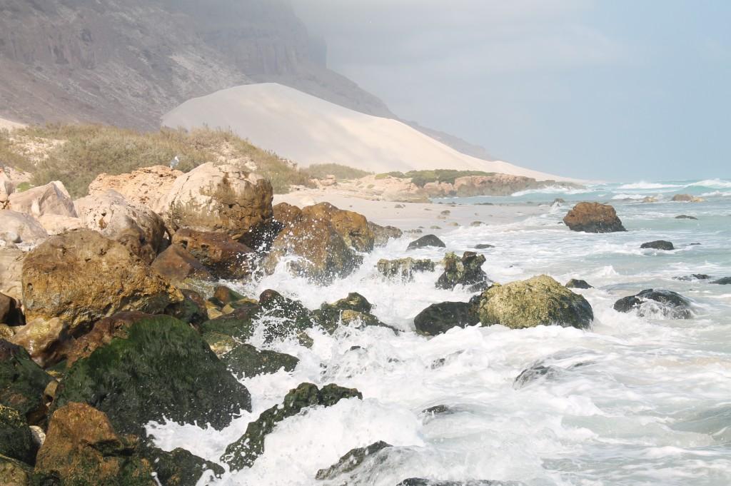 Zdjęcia: Wyspa Sokotra, Arabia, Drzewa butelkowe, JEMEN