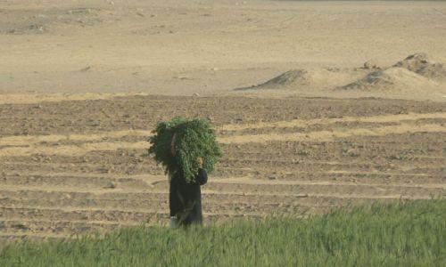 Zdjęcie JEMEN / - / gdzieś w Wadi Hadramaut / Kobieta w polu.