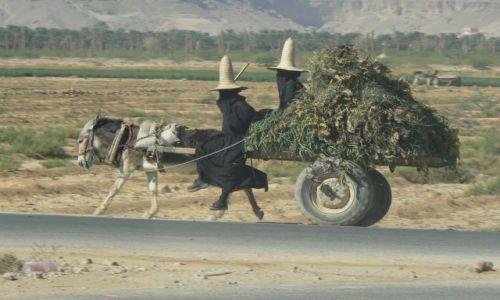 Zdjęcie JEMEN / - / Wadi Hadramaut / Z pola do domu.