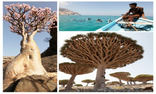 Zdjęcie JEMEN / Socotra / Socotra / Sokotra