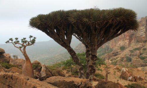 Zdjęcie JEMEN / Arabia / Wyspa Sokotra / Krajobraz Sokotry