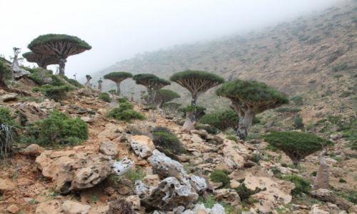 Zdjecie JEMEN / Arabia / Wyspa Sokotra / Płaskowyż Momi