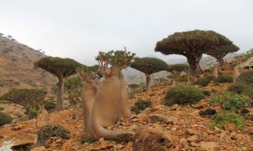 Zdjęcie JEMEN / Arabia / Wyspa Sokotra / Sokotra