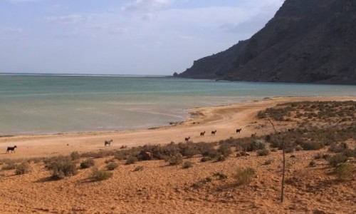 Zdjecie JEMEN / -Socotra / Socotra / in the middle of nowhere